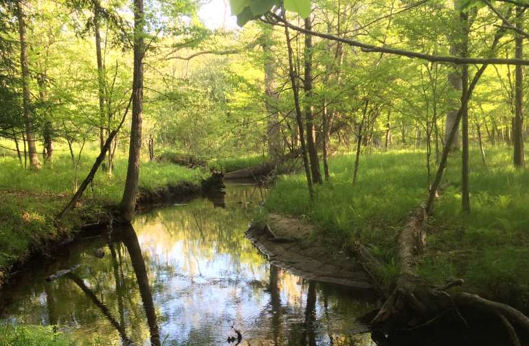 cool off in the summer by dangling your toes in the pristine trout stream