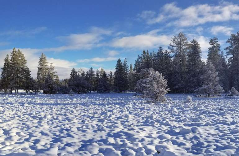 Winter Pictures