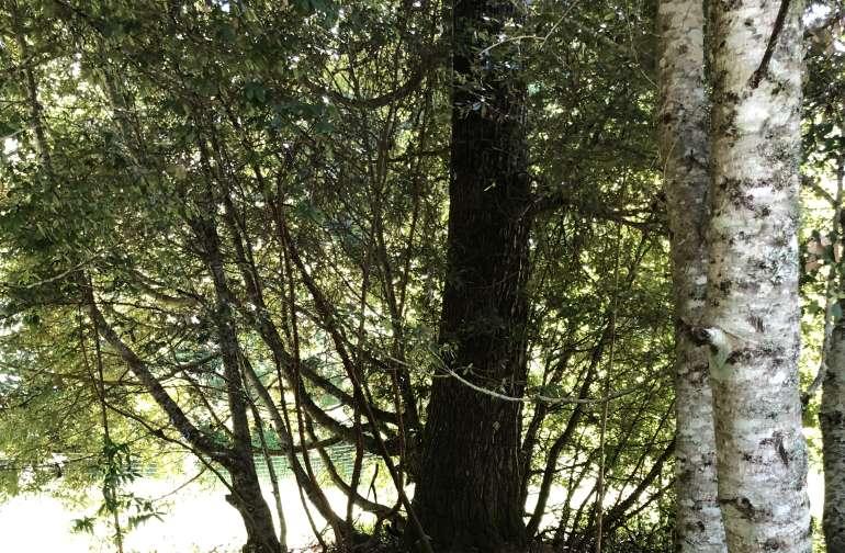 Big Oak site