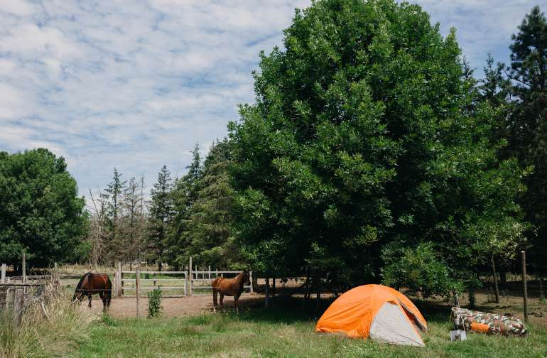 We setup our campsite right next to the beautiful horses.