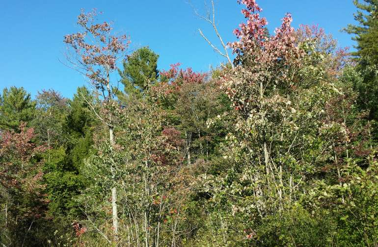 Some fall photos of the trees near the pond.