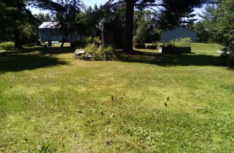 Center of 1 acre backyard
