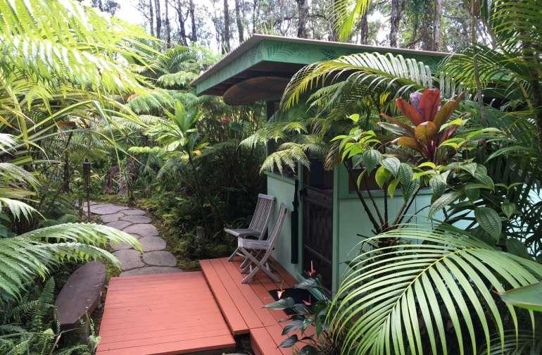 Surfer's Rainforest Hale
