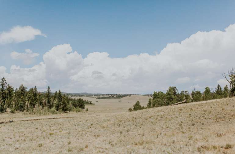 South Park Forest and Plains