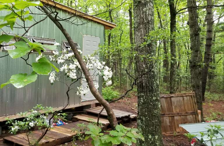 Tiny Rose Cottage in the woods with Mtn Laurel in full bloom in early summer