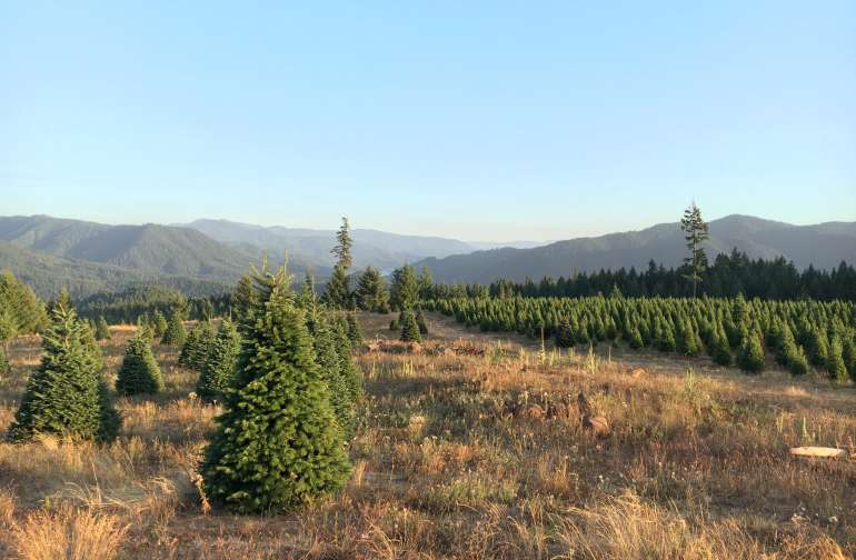 Hot Tub Mountain! Views - tree farm