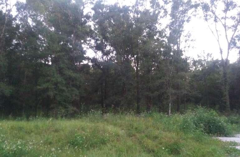 Large wooded yard