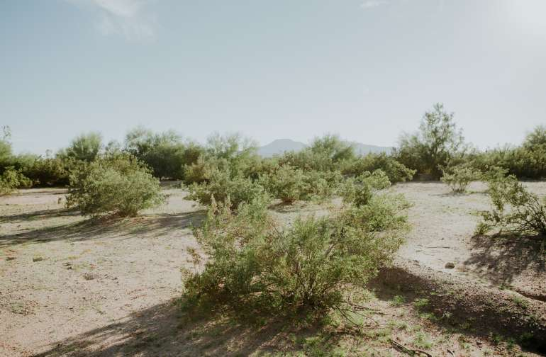 Acres upon acres of vacant land right next to the RV park where you can explore with your doggos!