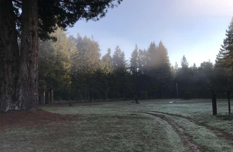 Sinclair Majestic Meadow