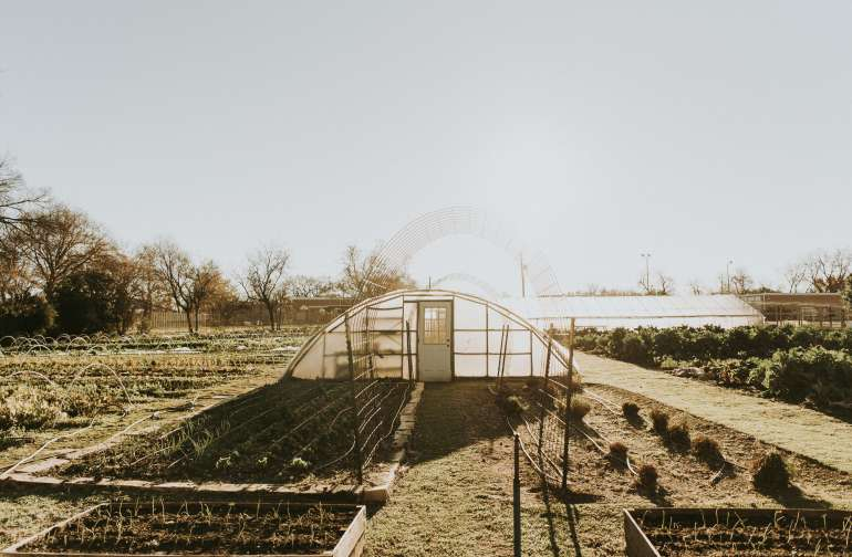 Despite being in the middle of Austin, the farm is quite large. Enjoy rows and rows of green veggies, raised beds, and a large greenhouse!