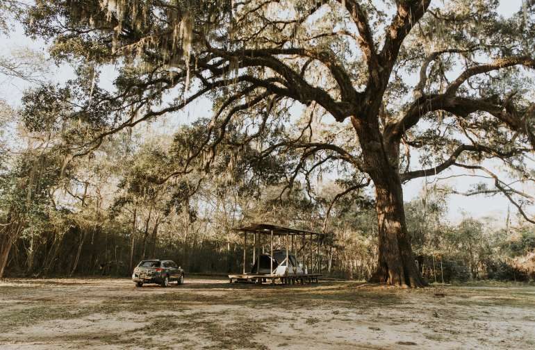 The campsite is tucked next to one of the largest trees on the property.