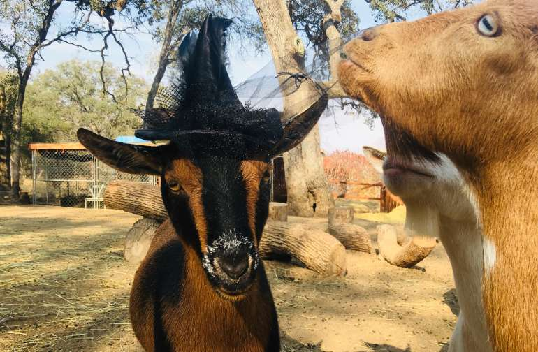 Riverside Ranch @ Mini Goat Farm