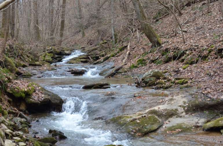 The sound of rushing water along the trails is both invigorating and calming.