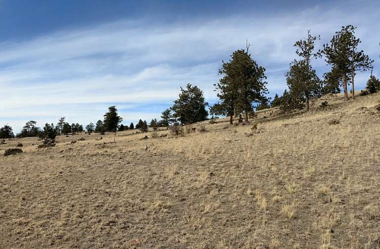 There are many nice places to camp on this 15 acres of high mountain rancho.
