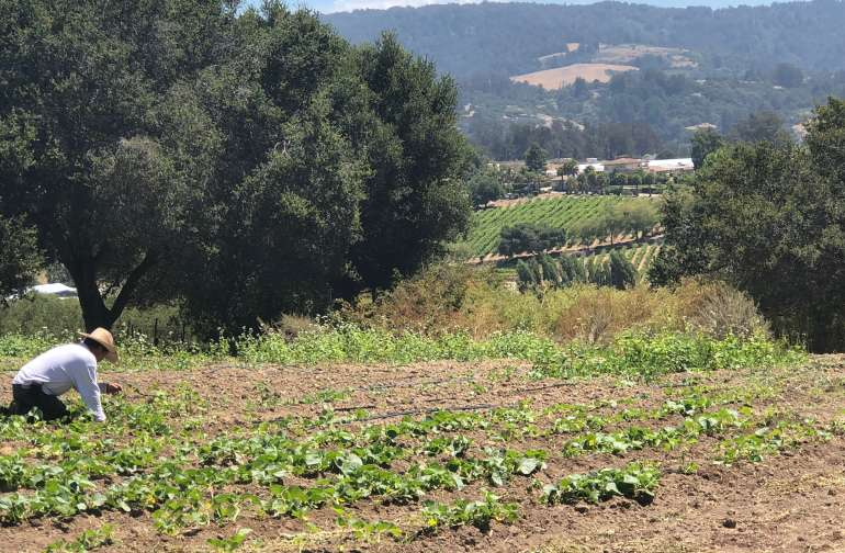 Just past our farm gardens is a view overlooking Pajaro Valley!
