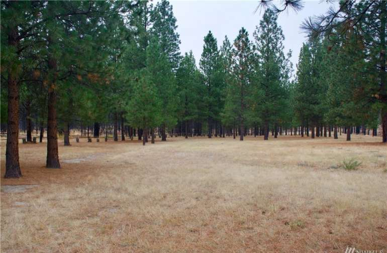 Lots of open space for a tent or rv