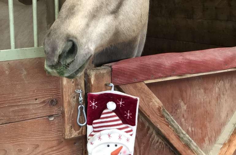 Cowgirl cabin /private horse ranch