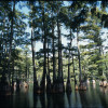 Big Thicket Backcountry
