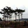 Upper Forest Campground
