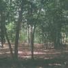 Killens Pond Campground