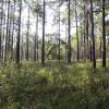 Seminole State Park Campground