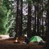 Redwood Camp