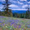 Godman Campground/Trailhead