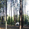 Christopher Creek Campground