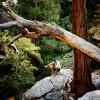 Buckhorn Campground-Open