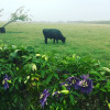 Startz cattle company ranch