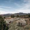 Taos Goji Farm Campsites
