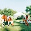 Yurt Home on a Horse Farm
