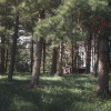 Woodsedge Retreat Cabin