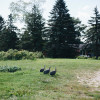 RV - Organic Farm Near Ann Arbor