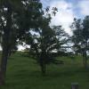 Backyard Country Oasis