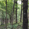 10 Acres of Virgin Forest