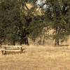 Oak Tree Camp