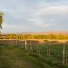 Thornhill Farm Campsite
