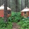 Cozy Yurt nestled in the woods