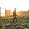 Farmstead Glamping in Bolinas