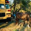 Bus Camping at the Retreat