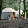 Yurt Glamping in the Forrest