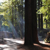 Redwood Rain Forest Camp