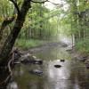 Bold Paths creek campsite