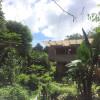 Rain Forest Barn Cabin