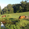 Woodland Horse Pasture