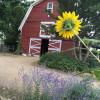 Myers Barn Farm Stay