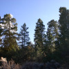 Mount Blanca View Camp