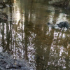 Hidden Creek Farm
