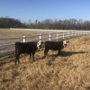 Cavvietta Quarter Horse & Cattle Co